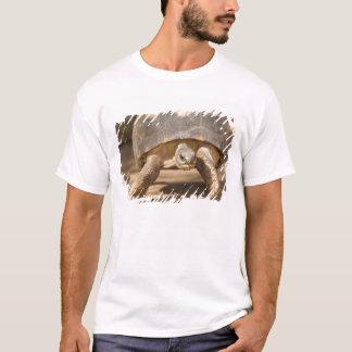 Tortuga irradiada, radiata de Astrochelys, con a Camiseta