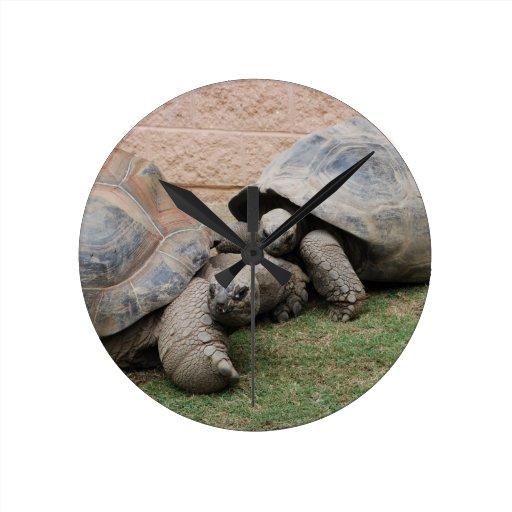 Tortugas gigantes relojes de pared zazzle - Reloj gigante pared ...