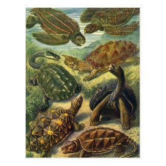 Tortugas y tortugas de mar del vintage de Ernst Postal
