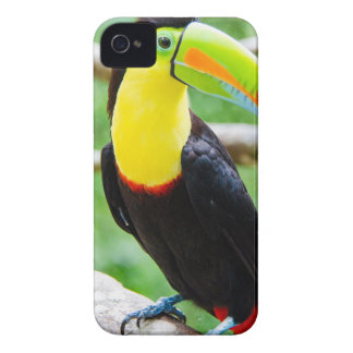 Toucan precioso carcasa para iPhone 4