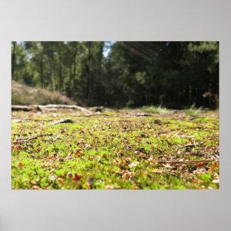 Trayectoria de bosque - póster