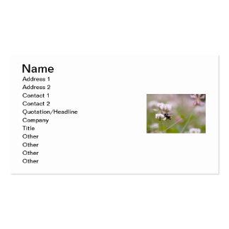 Trébol de polinización de la abeja plantilla de tarjeta personal
