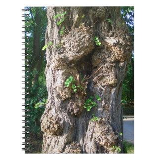 Tree Spiral libreta de foto