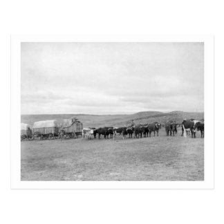 Tren de los bueyes y de los carros dirigidos hacia postal