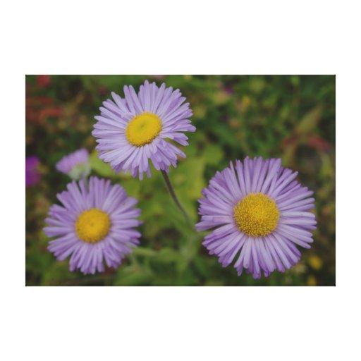 Tres flores de Fleabane de la montaña olímpica Impresión En Lona Estirada