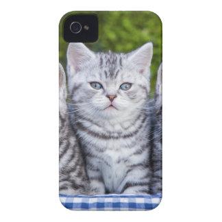 Tres gatos de tabby de plata jovenes en cesta a carcasa para iPhone 4