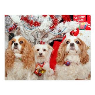 Tres navidad sabio de los perritos postal