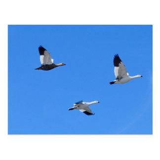 Tres pájaros en el cielo postal