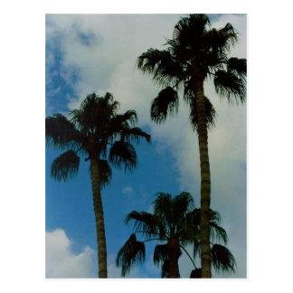 Tres palmas postal