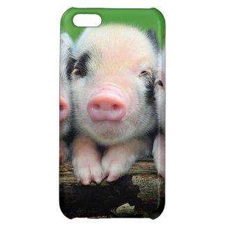 Tres pequeños cerdos - cerdo lindo - tres cerdos