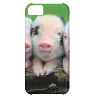 Tres pequeños cerdos - cerdo lindo - tres cerdos funda para iPhone 5C