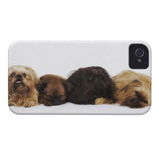 Tres perros de Pekingese y solo barro amasado que  iPhone 4 Case-Mate Funda