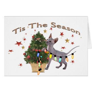 Tres tarjetas de Navidad de los gatos y de un