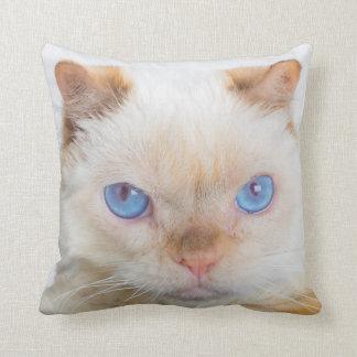 Trident la almohada de tiro del gato