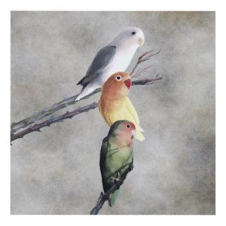 Trío bonito del Lovebird Cuadro