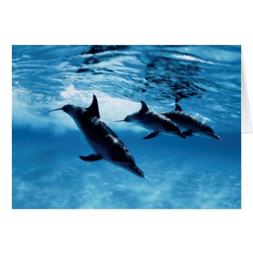 Trío de delfínes tarjeton