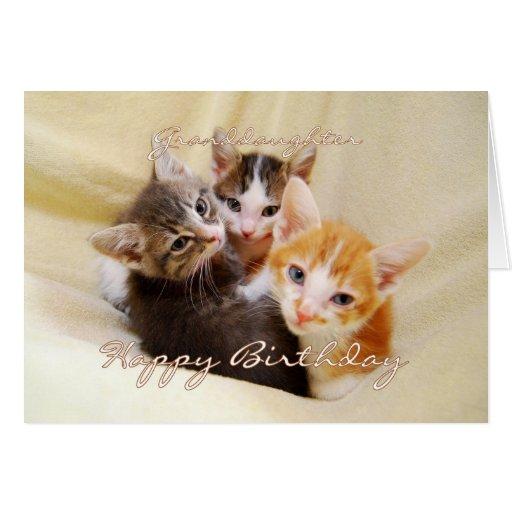 Trío del feliz cumpleaños de la nieta de gatitos felicitación