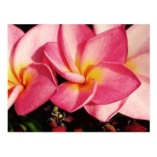 Trío hawaiano del Frangipani del Plumeria de la Postal