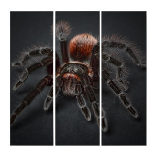 Tríptico Araña melenuda del tarantula
