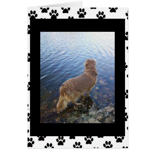 Triste para su pérdida. (perro) (2) tarjeta