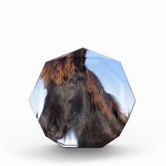 Trofeo Acrílico Cabeza del retrato del caballo negro del Frisian