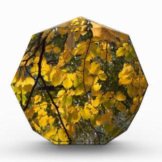Trofeo Acrílico Hojas de otoño amarillas y verdes