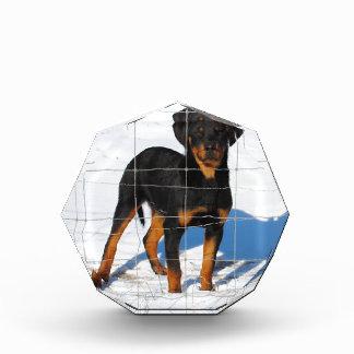 Trofeo Acrílico Lobo Rottweiler