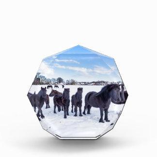 Trofeo Acrílico Manada de los caballos negros del frisian en nieve