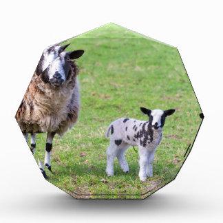 Trofeo Acrílico Mime a las ovejas con dos corderos recién nacidos