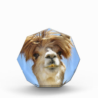 Trofeo Alpaca con el pelo loco