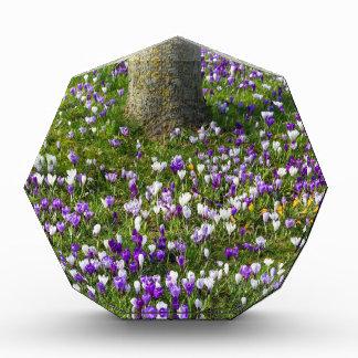 Trofeo Azafranes del campo de flores en hierba de la