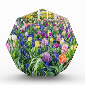 Trofeo Campo de flores con los jacintos y el puente de