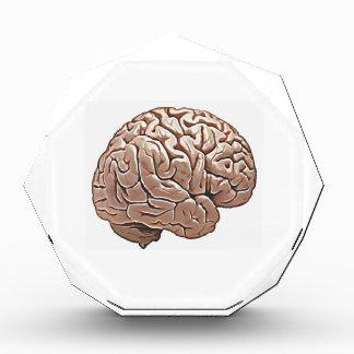 Trofeo cerebro humano