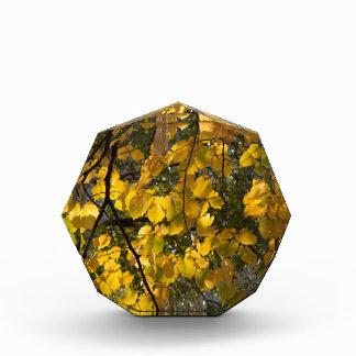 Trofeo Hojas de otoño amarillas y verdes