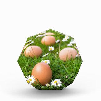 Trofeo Huevos del pollo en hierba de la primavera con las