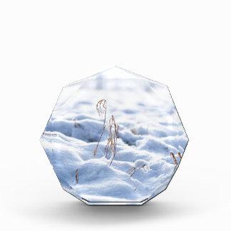 Trofeo Nieve en un prado en macro del invierno