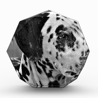 Trofeo Perro casero dálmata