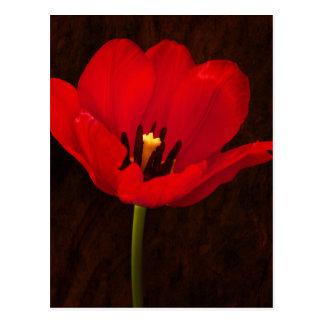 Tronco floral colorido de la flor roja del tulipán postal