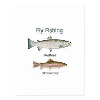 Trucha arco iris de la pesca con mosca - trucha postal