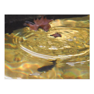 Trucha subacuática que alimenta en cala ahumada de postal
