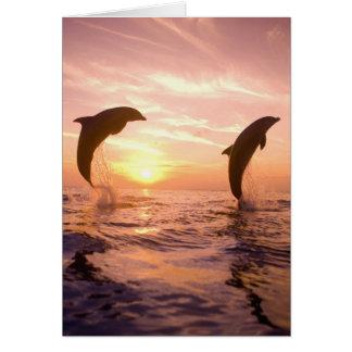 Truncatus) del Tursiops de los delfínes de Bottlen Tarjeta De Felicitación