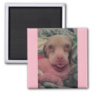 Tucker lleva el imán rosado del acento de las