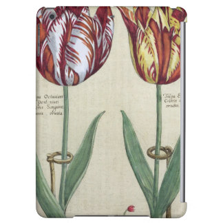 Tulipa Octaviani del pont, y Tulipa elegante, para