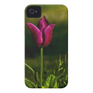 Tulipán púrpura con gotas de lluvia Case-Mate iPhone 4 fundas