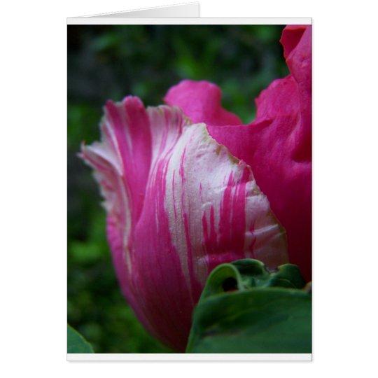 Tulipán rosado tarjeta de felicitación