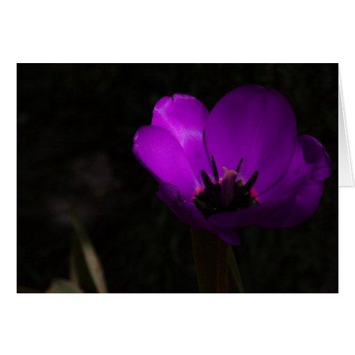 Tulipán violeta tarjeta