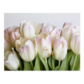 Tulipanes en colores pastel tarjeta postal