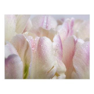 Tulipanes en colores pastel tarjetas postales