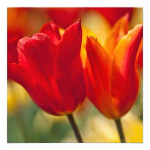 Tulipanes Lirio-florecidos rojos Invitaciones Personalizada