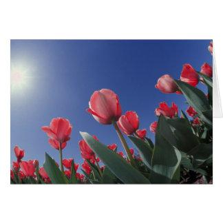 Tulipanes rojos del ángulo muy bajo Cincinnati Tarjeton
